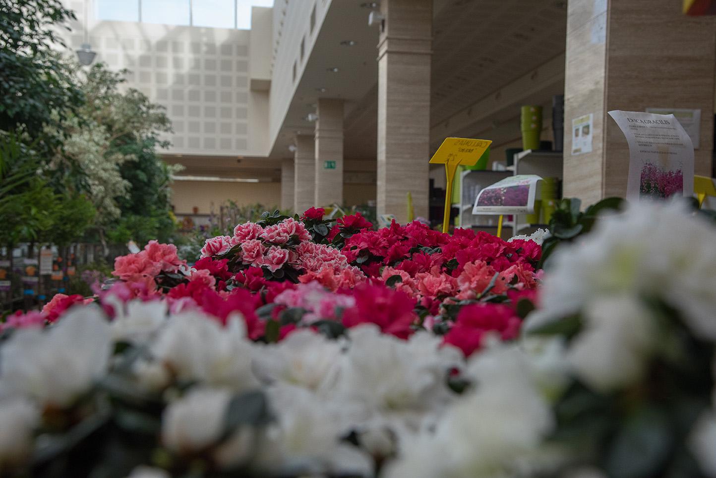 Flores de exterior