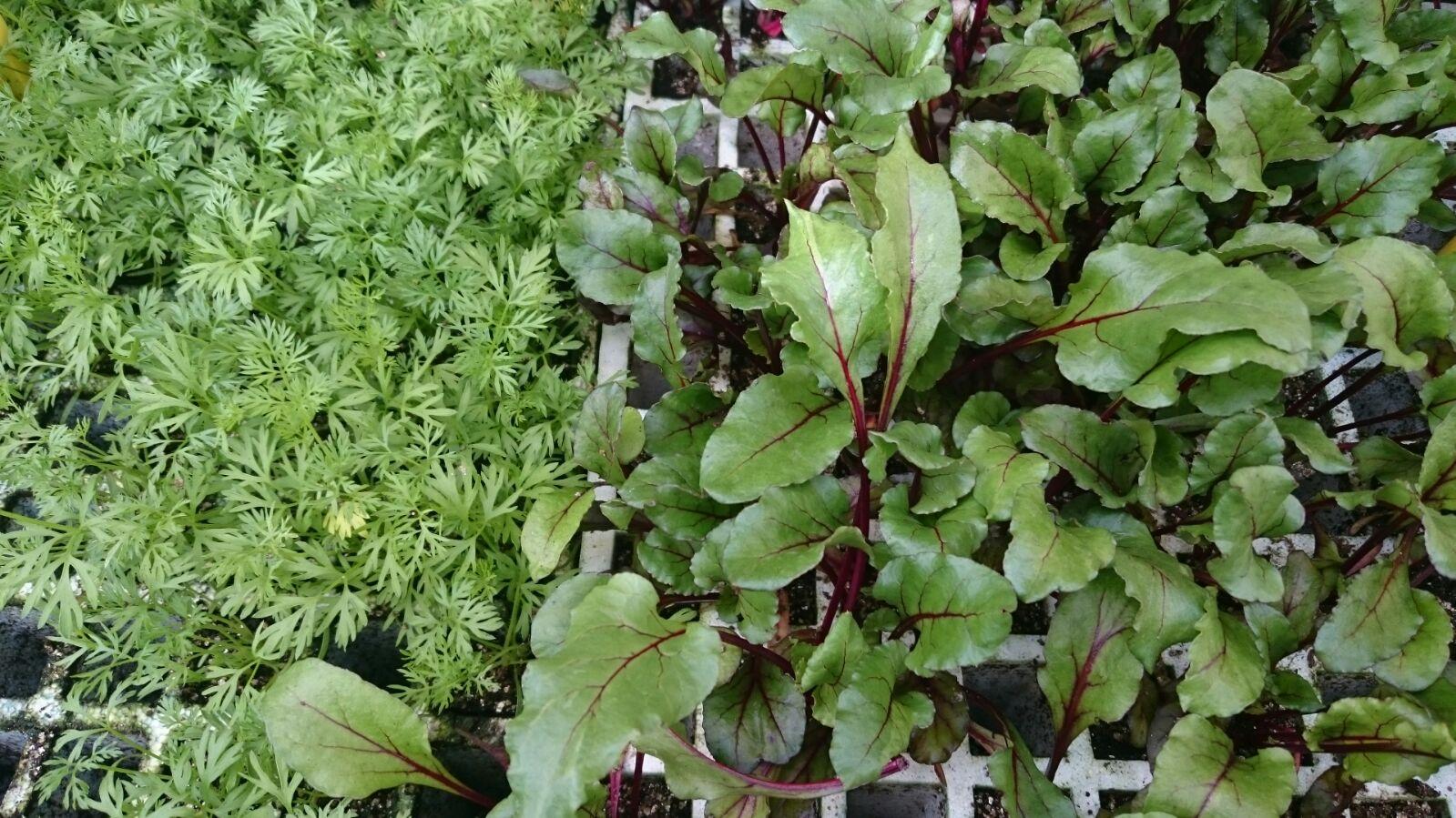 Plantas de exterior resistentes al frio y al calor - Plantas de exterior resistentes al calor ...