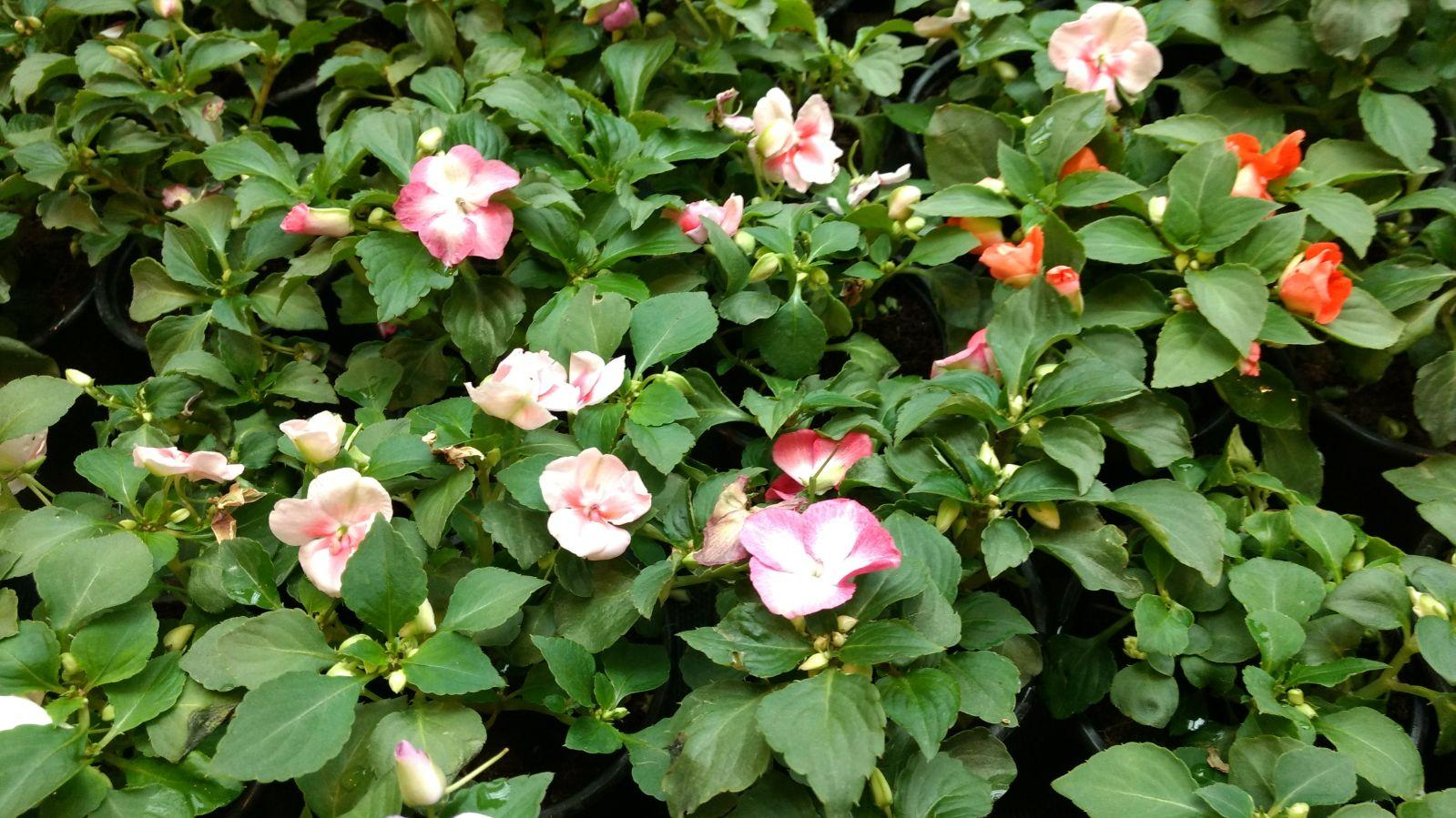 Flores en mayo: Alegrías