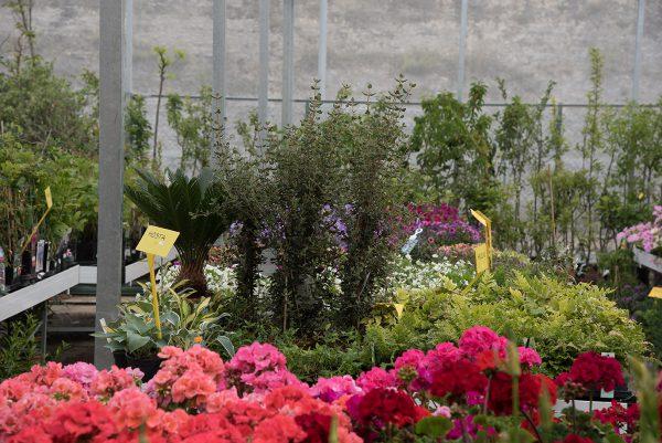 Centro de Jardinería Gorbeia