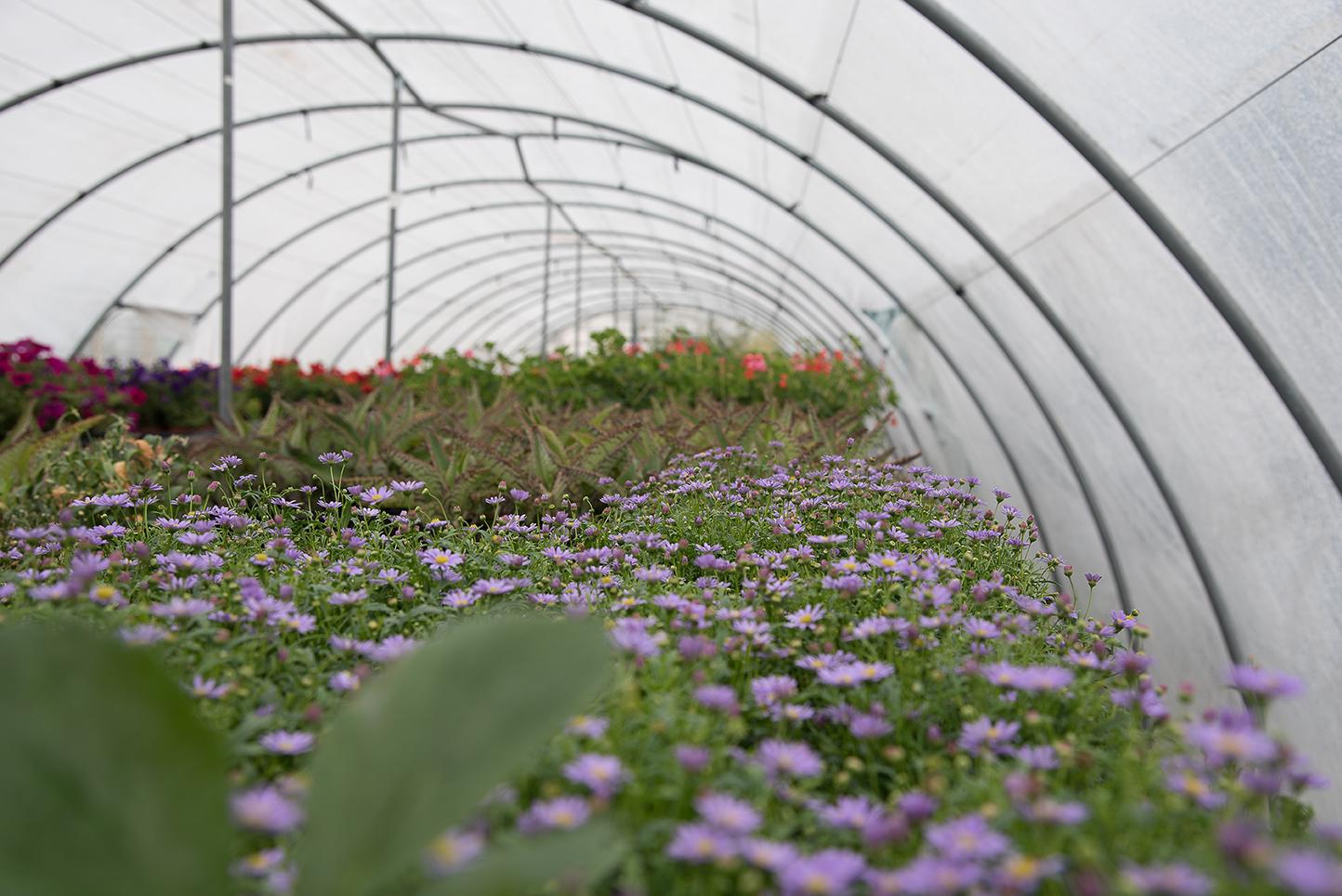 018 centro de jardiner a gorbeia for Centro de jardineria