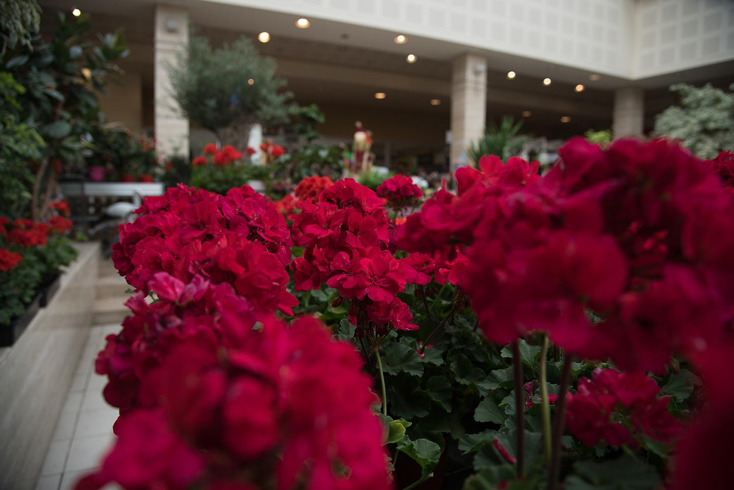 023 centro de jardiner a gorbeia for Centro de jardineria