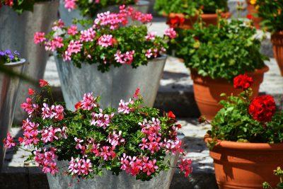 Cómo cuidar las plantas en verano