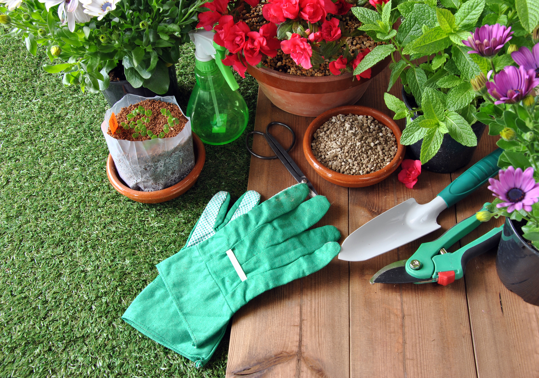 Las tareas del jardín en septiembre