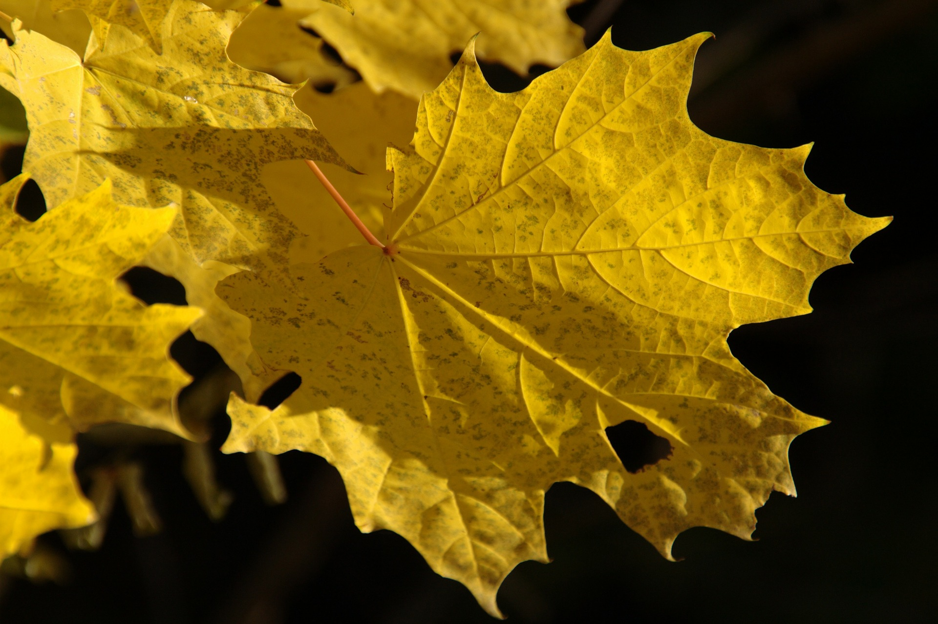 Llega el otoño: ¿Por qué las hojas cambian de color?