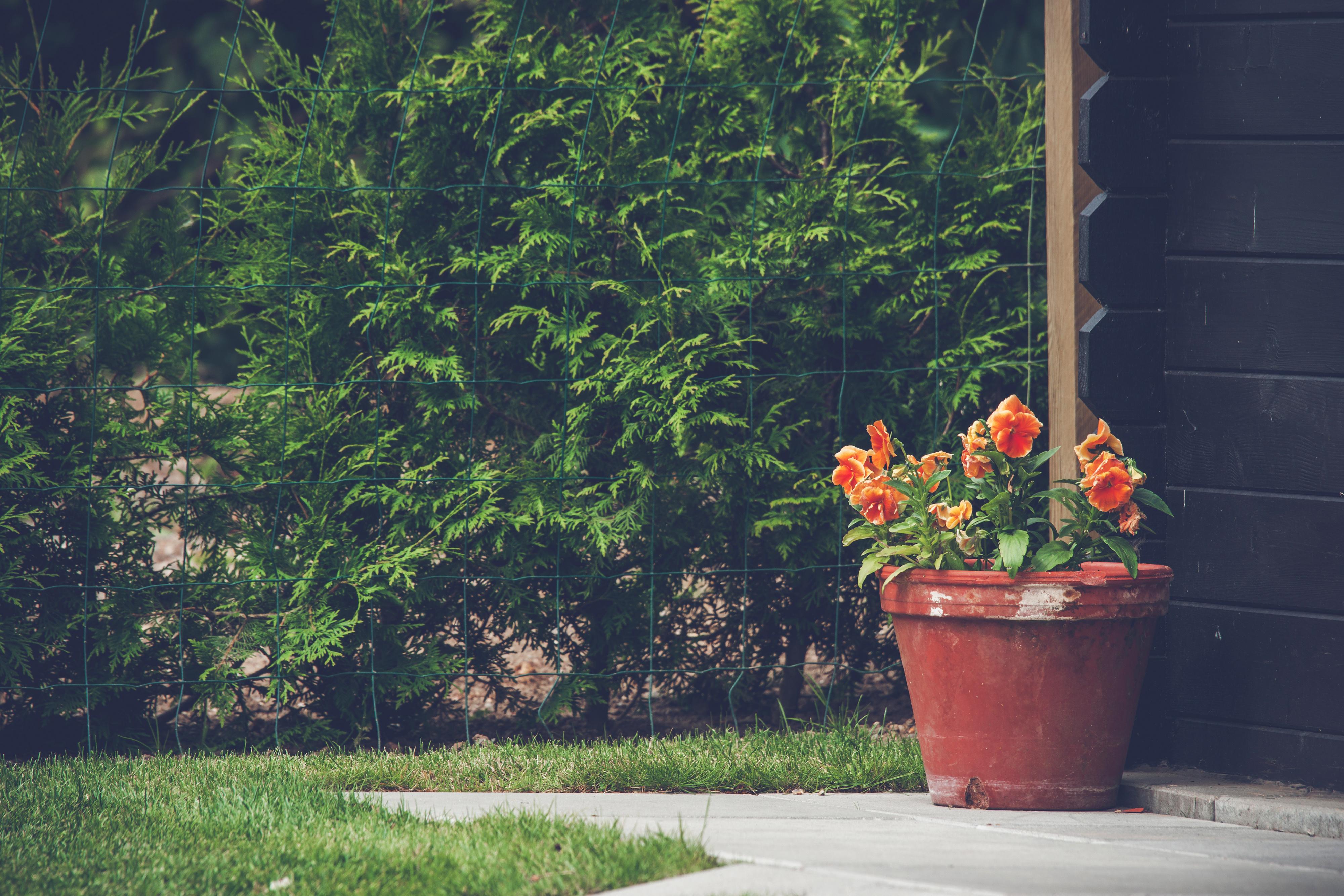 Cómo proteger las plantas del frío