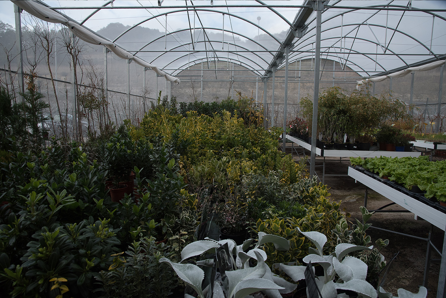 Centro de Jardinería Gorbeia - Vivero