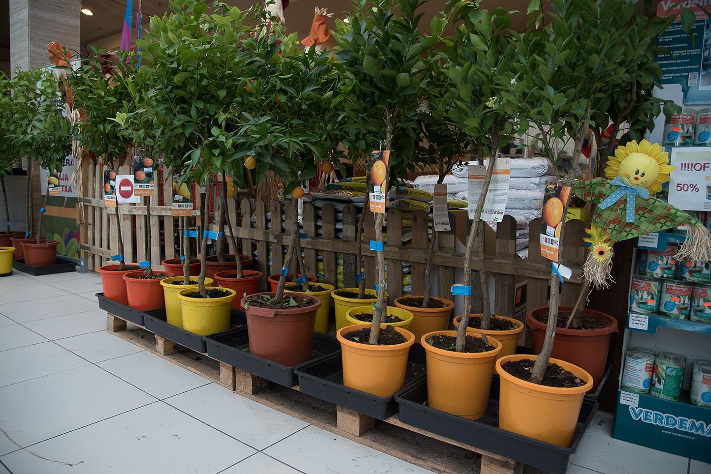 Centro de jardinería Gorbeia - Frutales