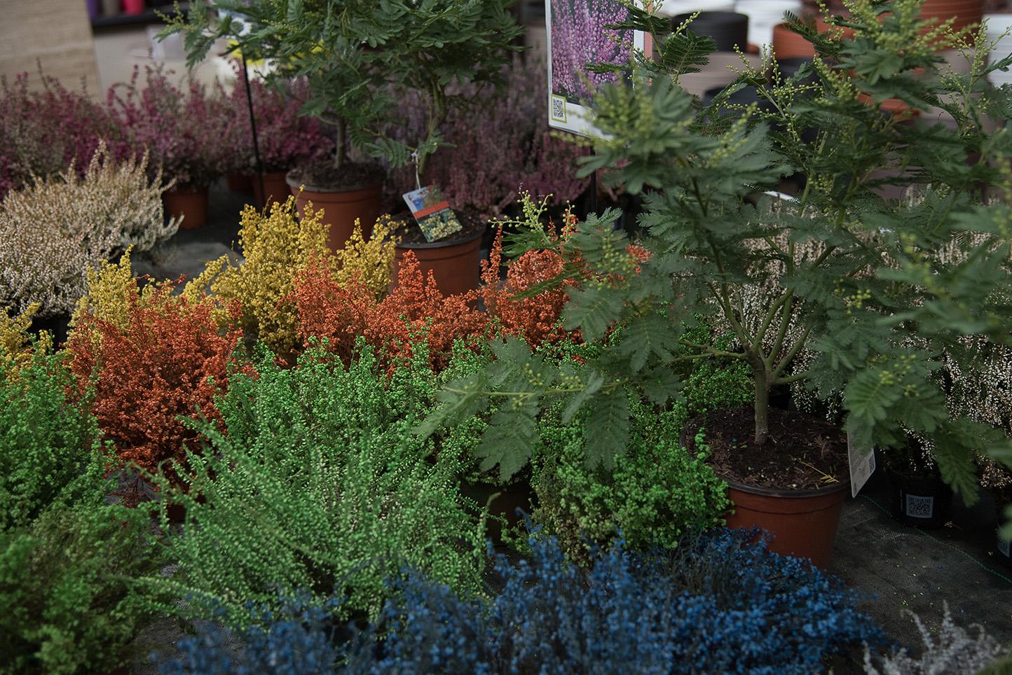 Centro de jardinería Gorbeia - Arbustos