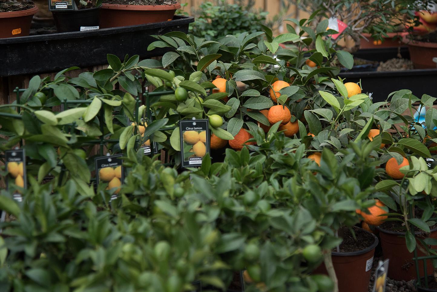 Centro de jardinería Gorbeia - Naranjos