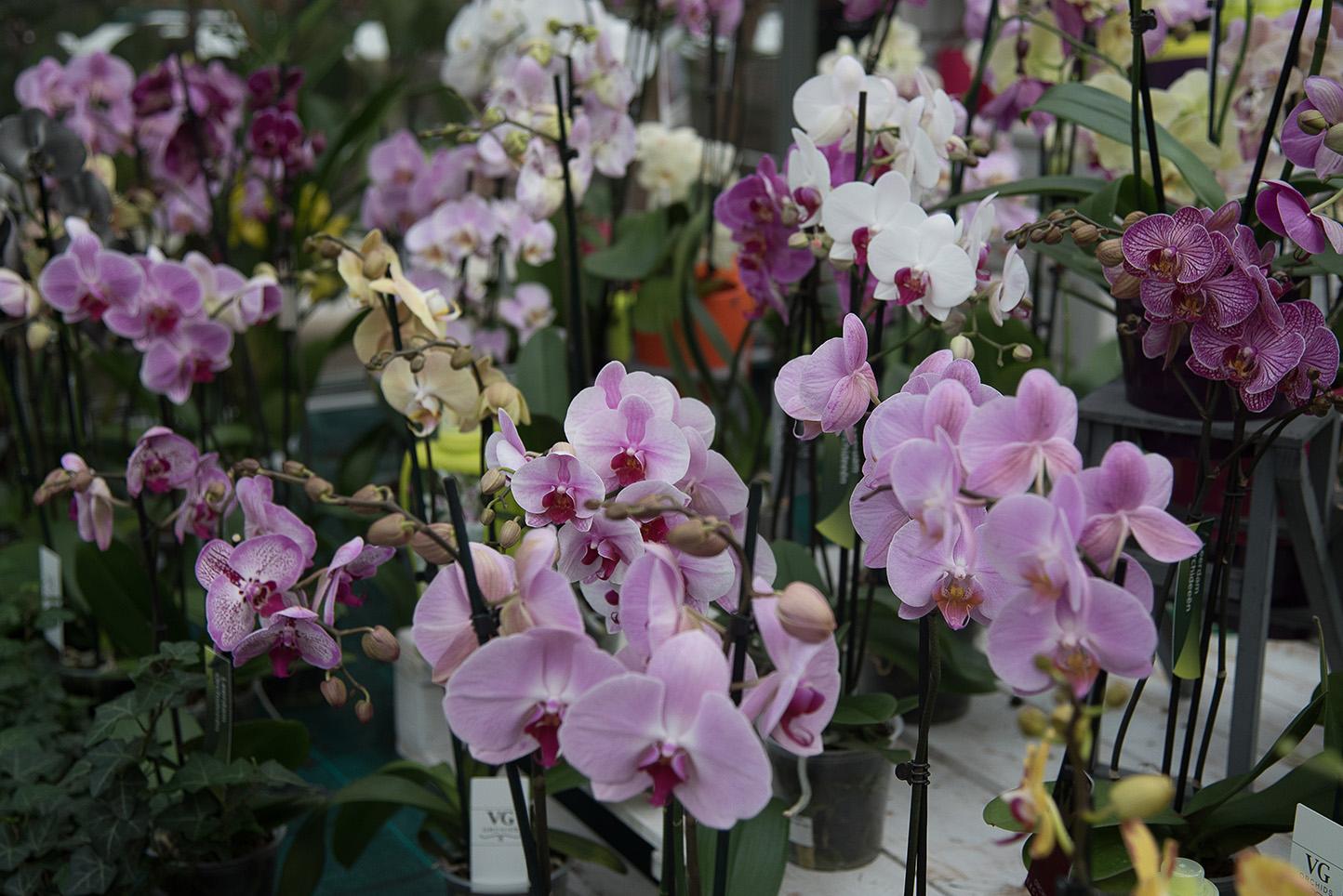 Centro de Jardinería Gorbeia - Orquídeas