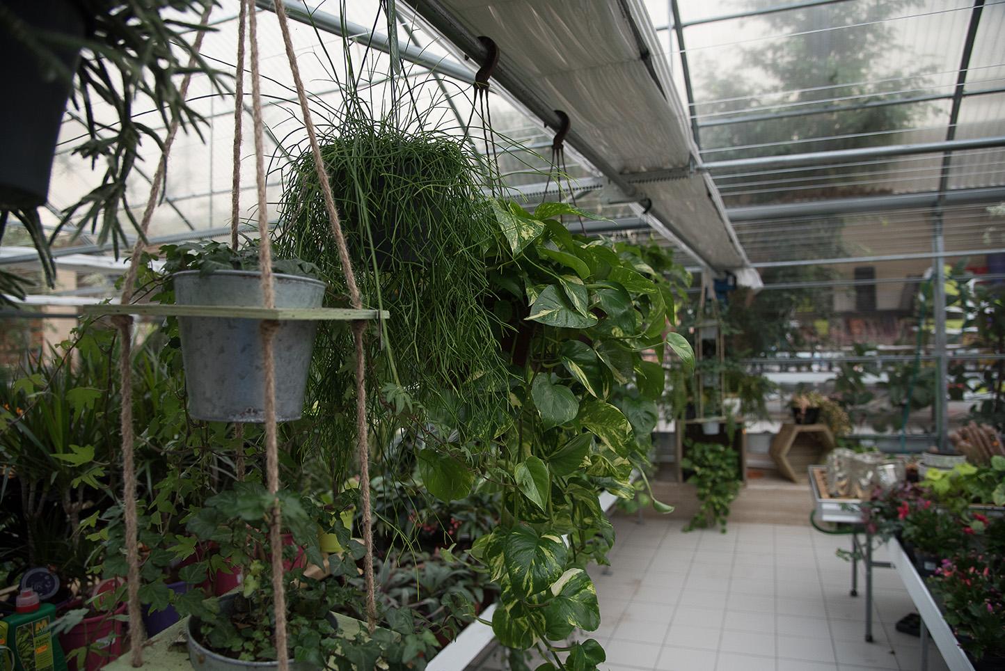 Centro de jardinería Gorbeia - Planta de interior