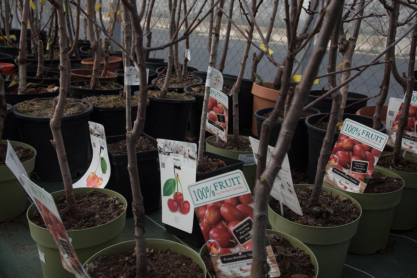 Frutales en maceta en Vitoria Gasteiz: Centro de Jardinería Gorbeia