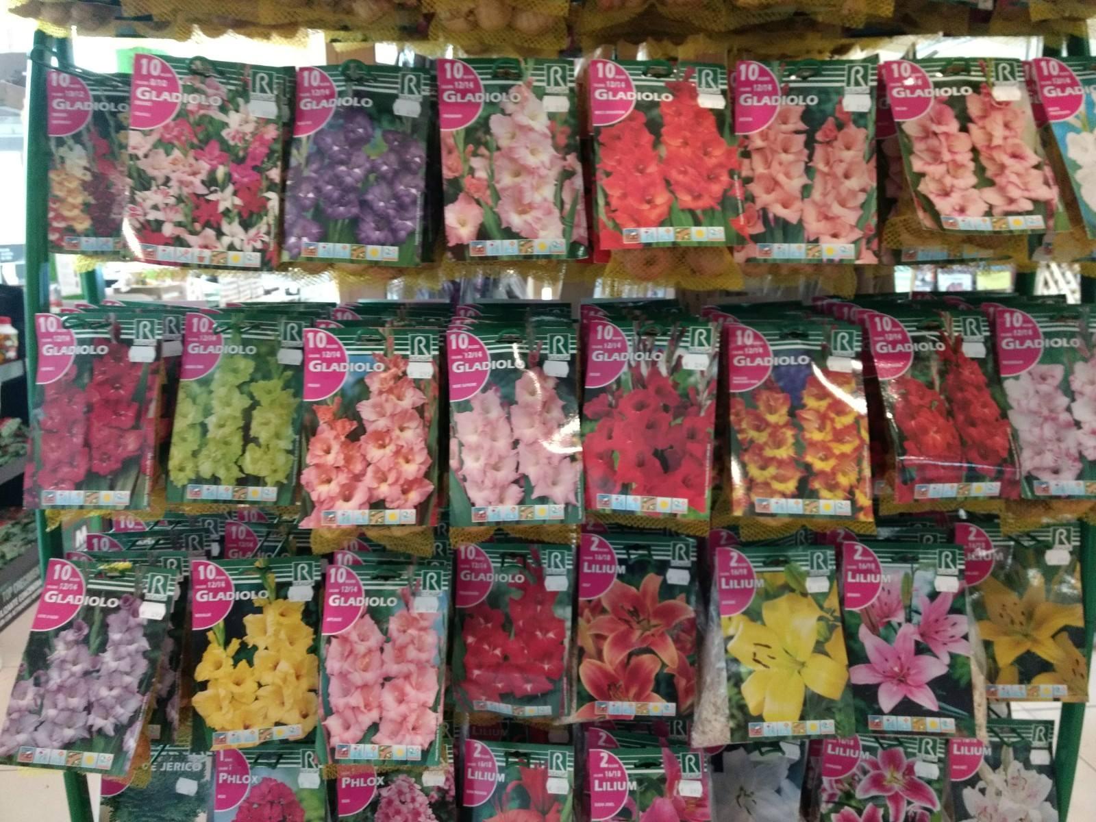 Comprar bulbos de primavera en Vitoria