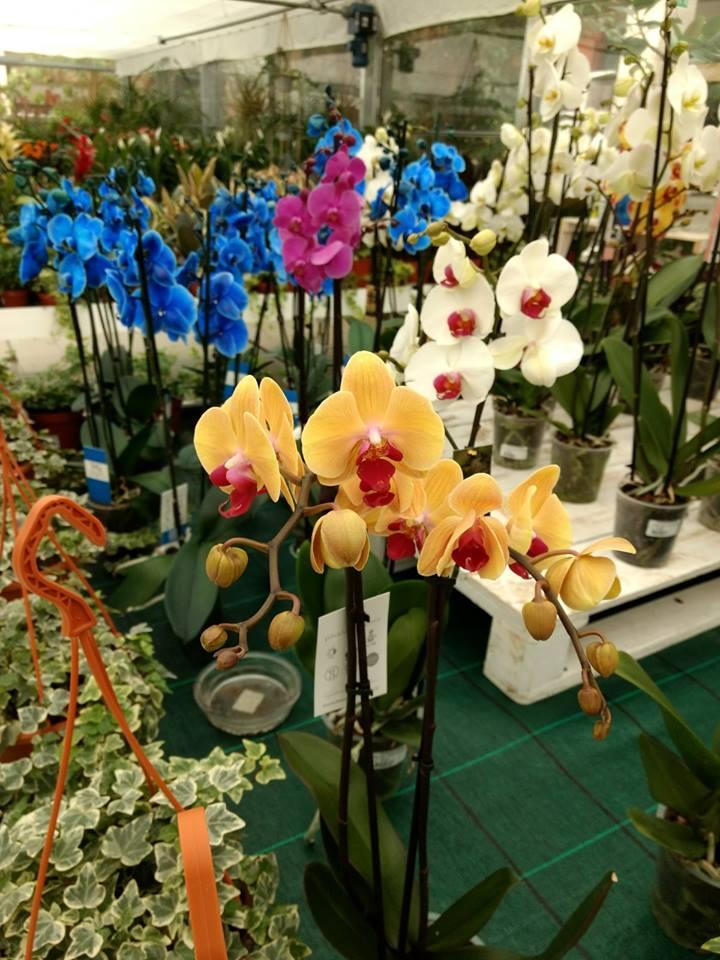 Comprar orquídeas en Vitoria