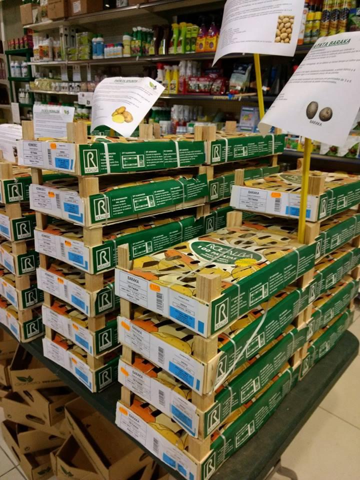 Comprar patatas para plantar en Vitoria