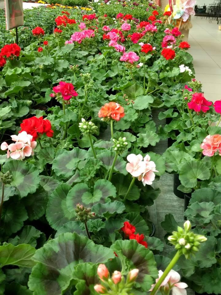 Marzo en el jardín
