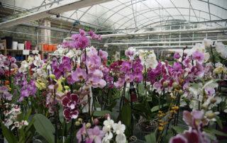 Día de la Madre; regala plantas: orquídeas