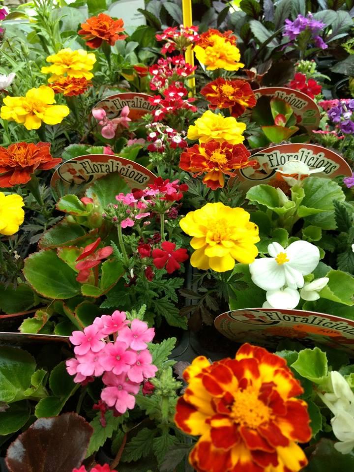 Comprar flores comestibles en Vitoria, Centro de Jardinería Gorbeia