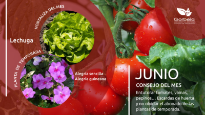 Junio en la huerta y en el jardín