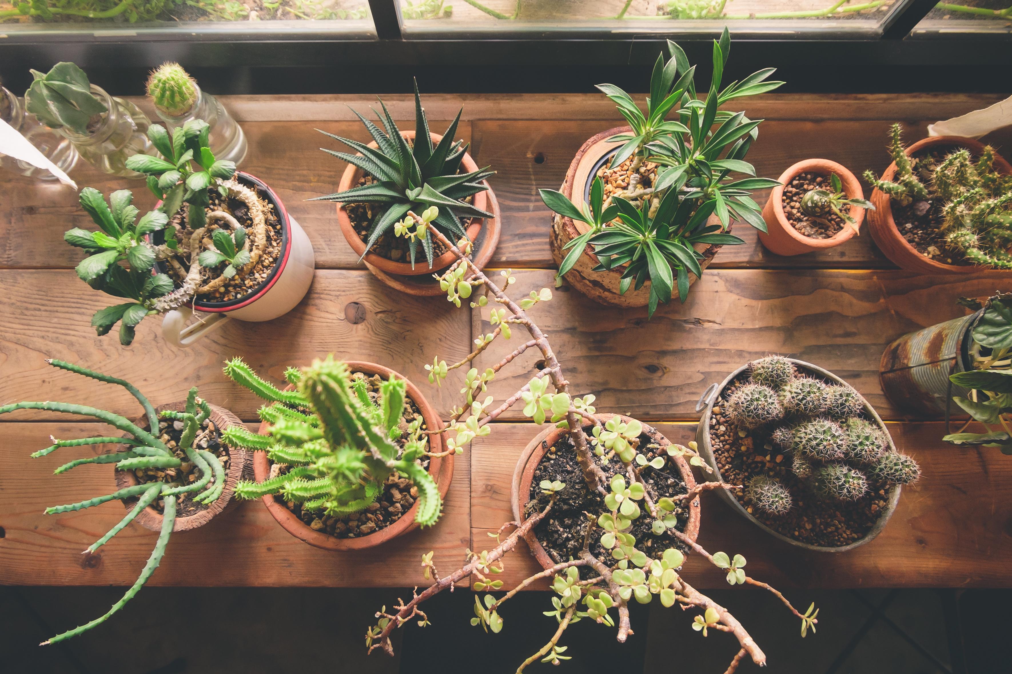Agosto y las plantas de interior