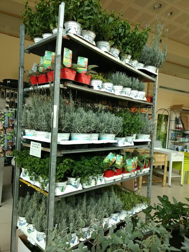 Plantas aromáticas en el Centro de Jardinería Gorbeia en Vitoria