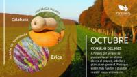 Infografía: Octubre en la huerta y en el jardín