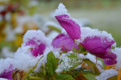 Frío: Plantas heladas - Consejos para proteger las plantas del frío
