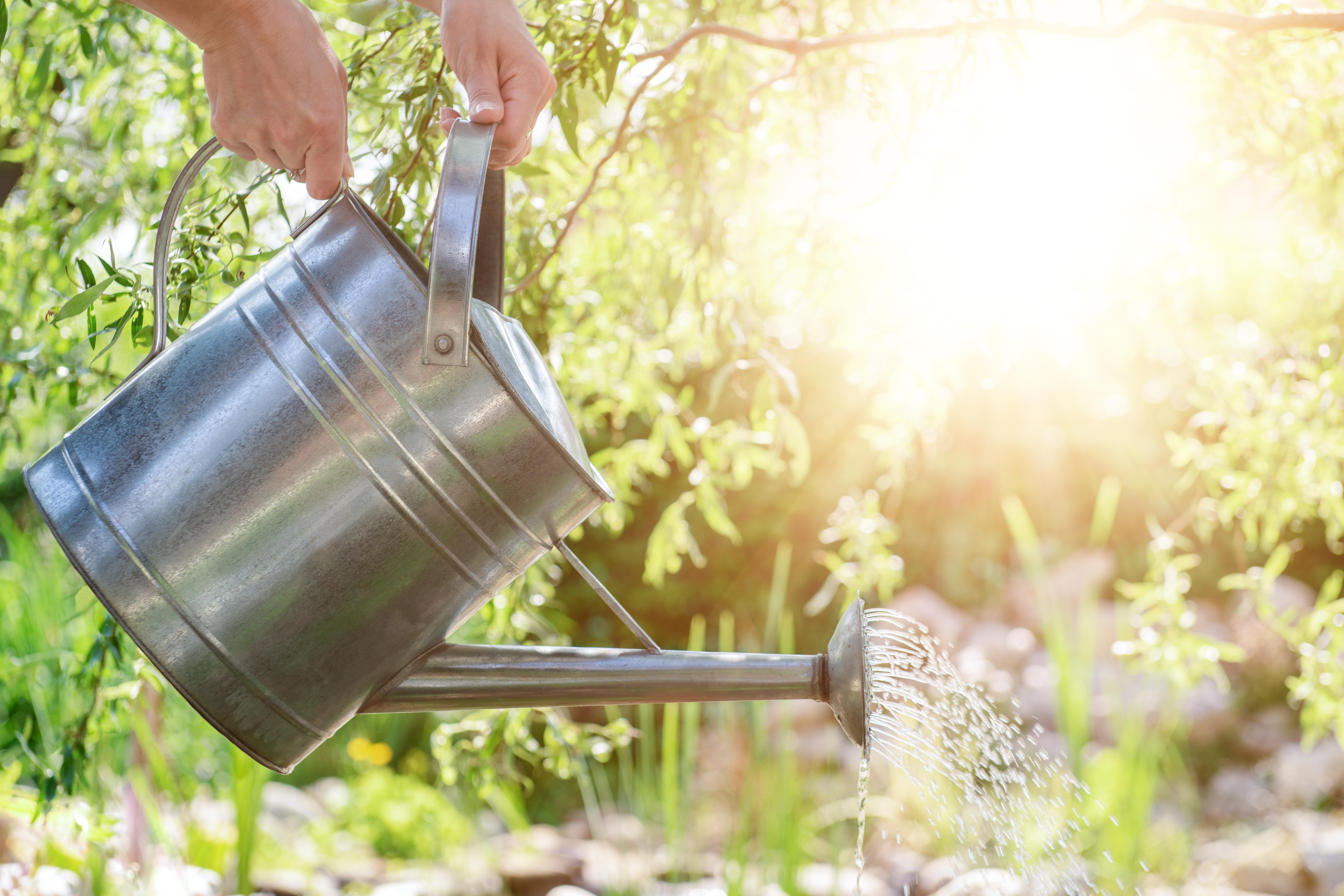 Cómo regar el jardín en noviembre