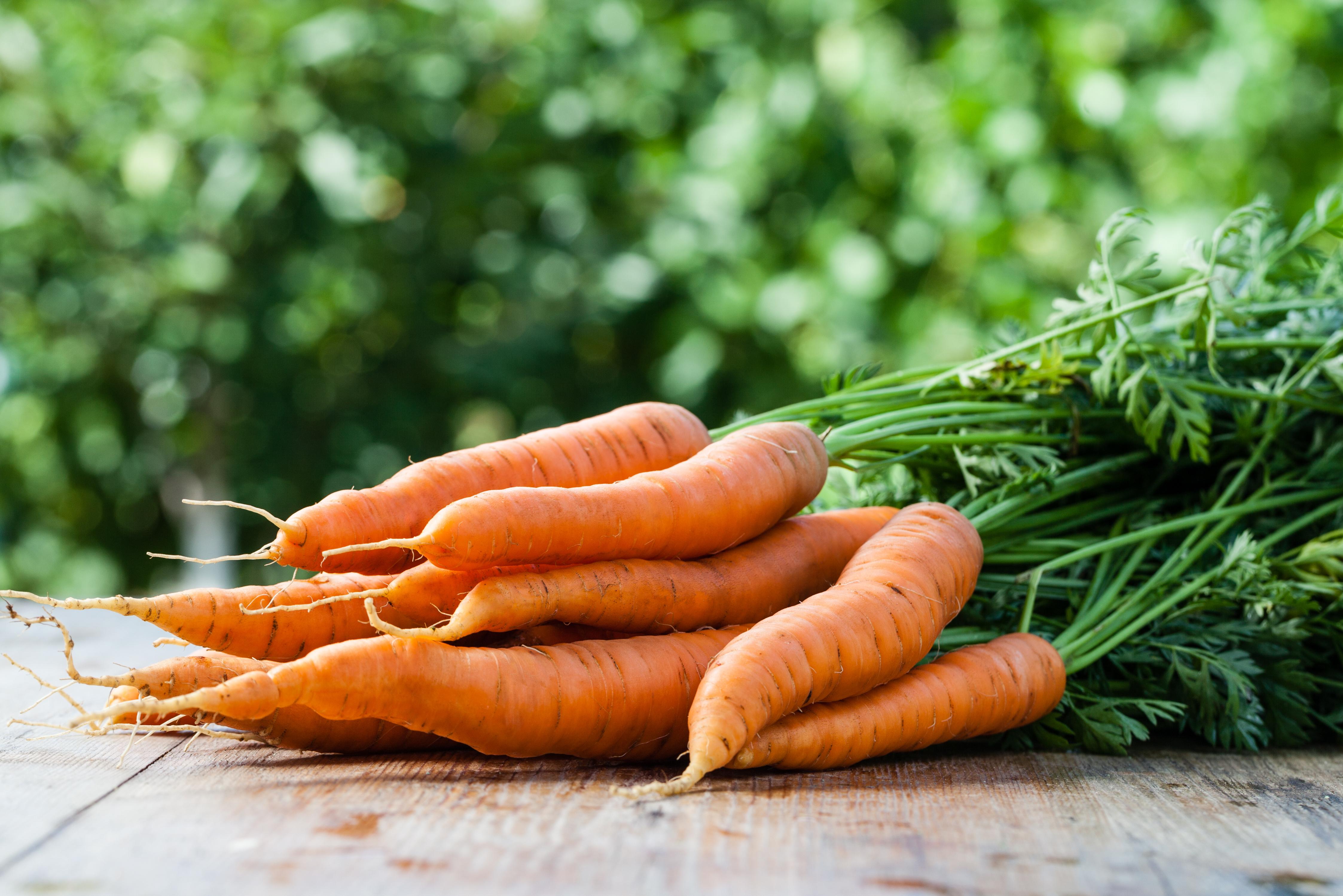 En noviembre en la huerta puedes recoger zanahorias