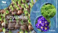 Infografía: Consejos para el mes de noviembre en la huerta y en el jardín