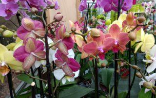 Comprar orquídeas en Vitoria Gasteiz