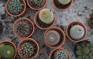 Comprar Cactus en Vitoria Gasteiz