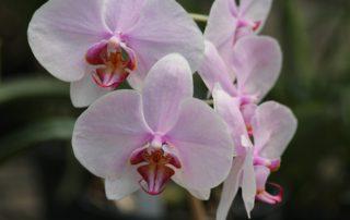Plantas de interior con flor: orquídea