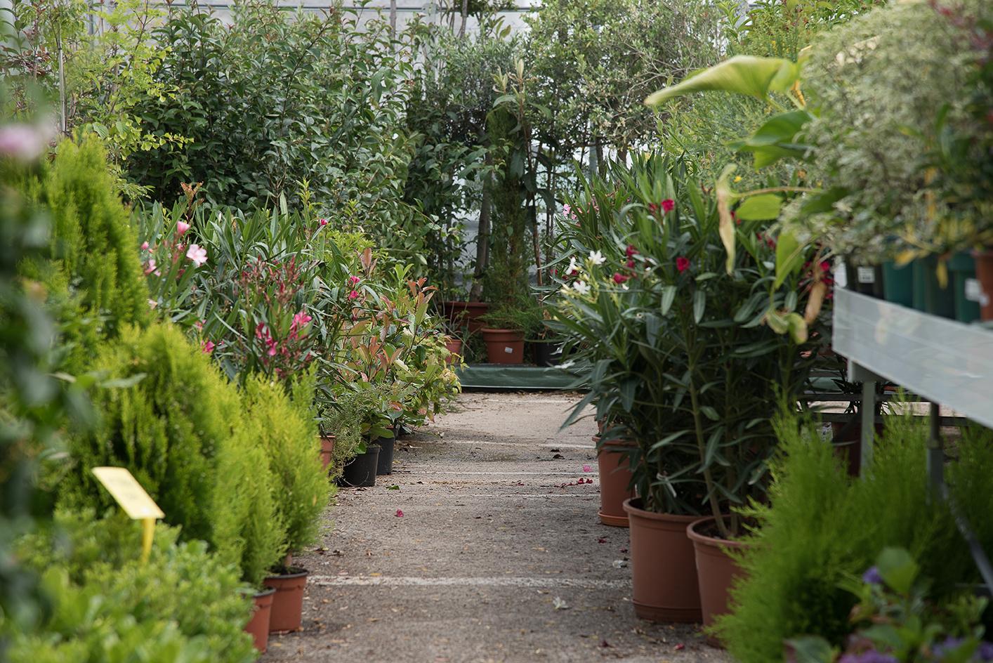 Vivero de Plantas en Vitoria Gasteiz
