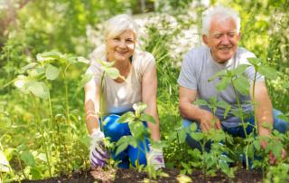 Beneficios de la jardinería para los mayores