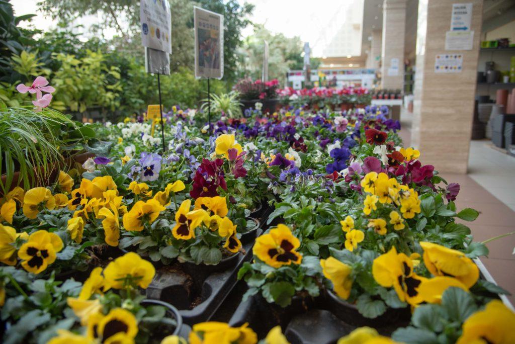 Comprar plantas de otoño en Vitoria: Pensamientos
