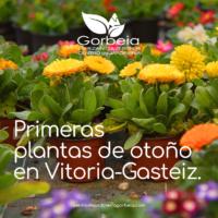 Primeras plantas de otoño en Vitoria Gasteiz