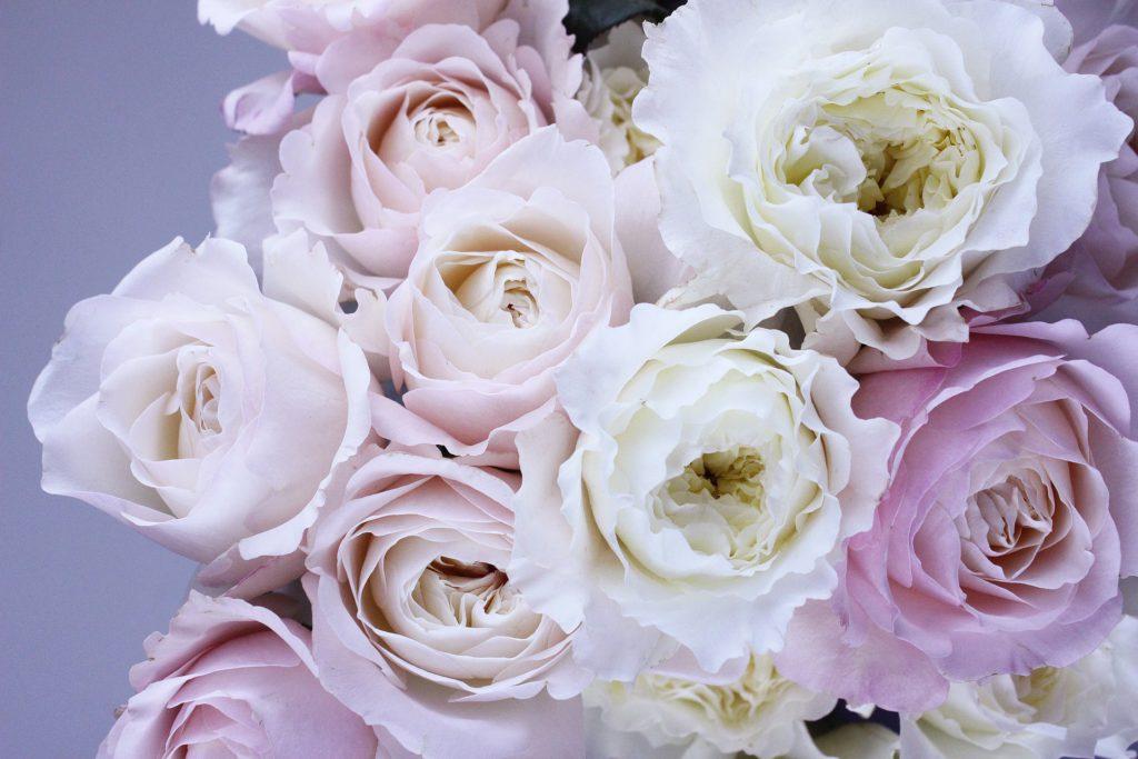 Comprar flores para Todos los Santos en Vitoria Gasteiz: Rosas