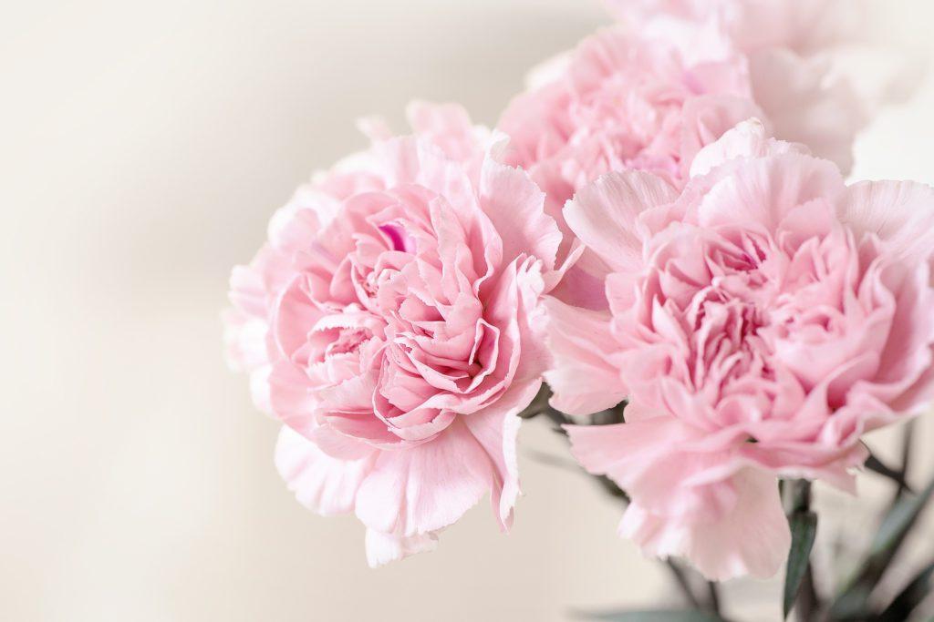 Comprar flores para Todos los Santos en Vitoria Gasteiz: Claveles