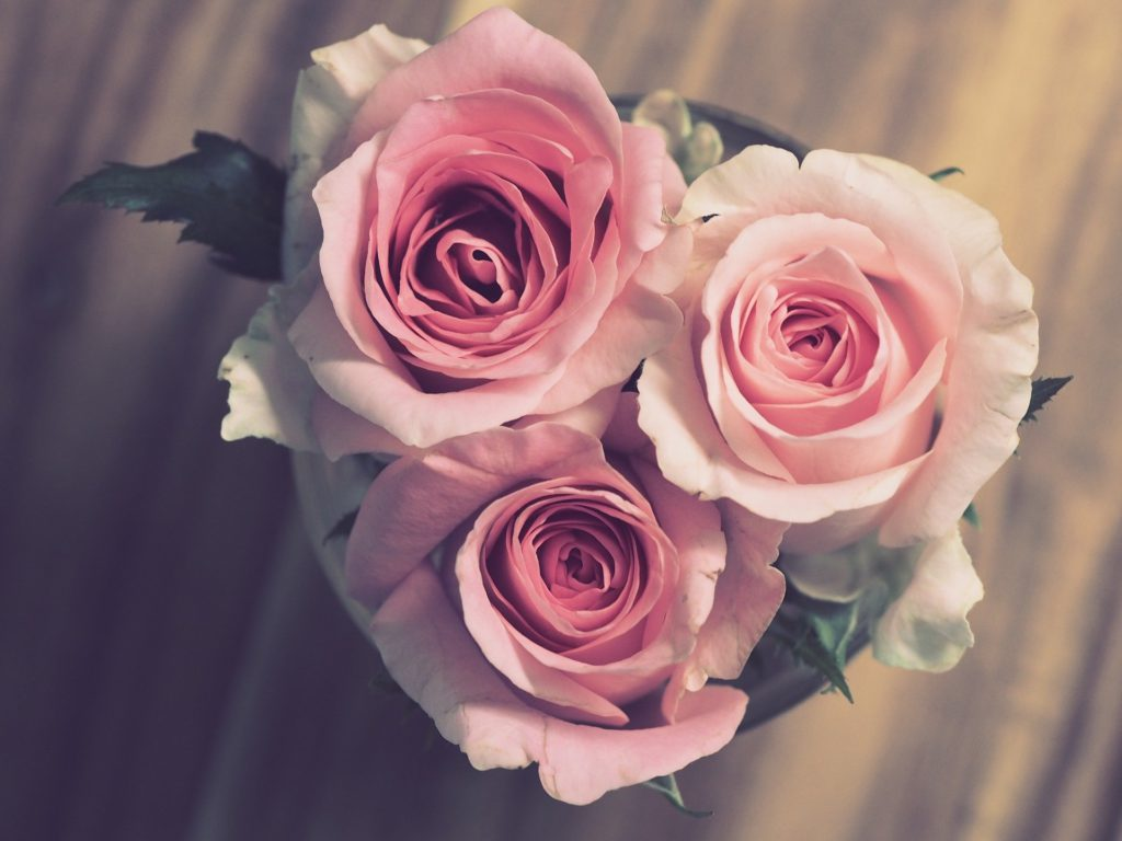 Rosas rosas para San Valentín