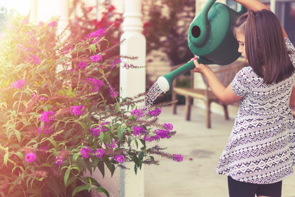 Plantas para cuidar con niños