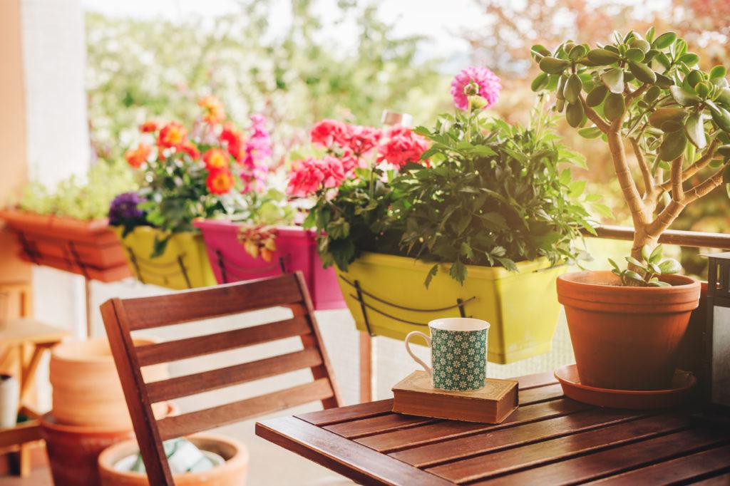 Cuatro plantas para llenar de vida tu terraza este verano