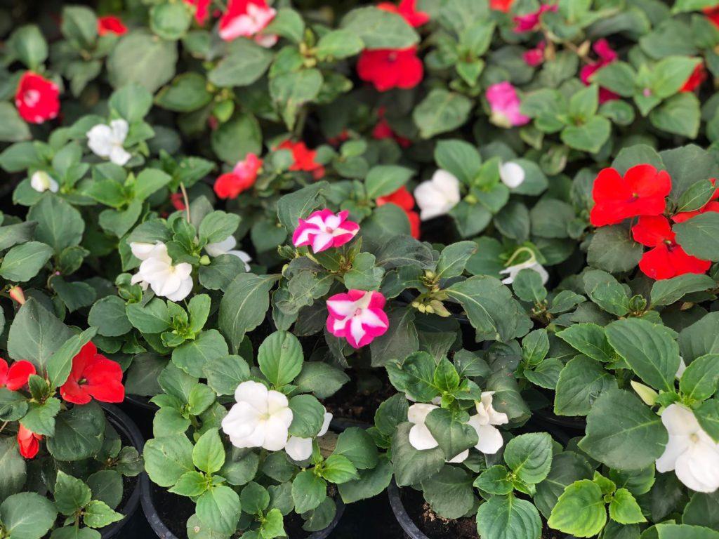 Plantas para el verano en Vitoria Gasteiz: alegría de la casa