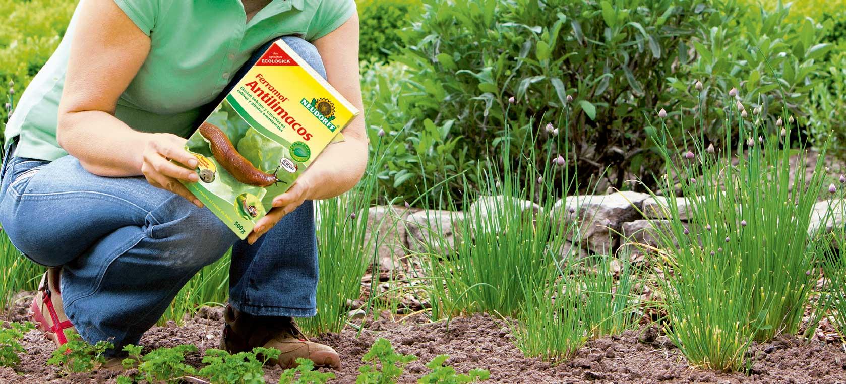 Cómo combatir plagas de babosas y caracoles - Centro de Jardinería Gorbeia