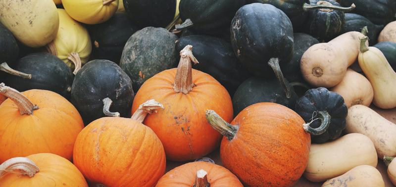 Octubre el mes de la calabaza - Centro de jardinería Gorbeia