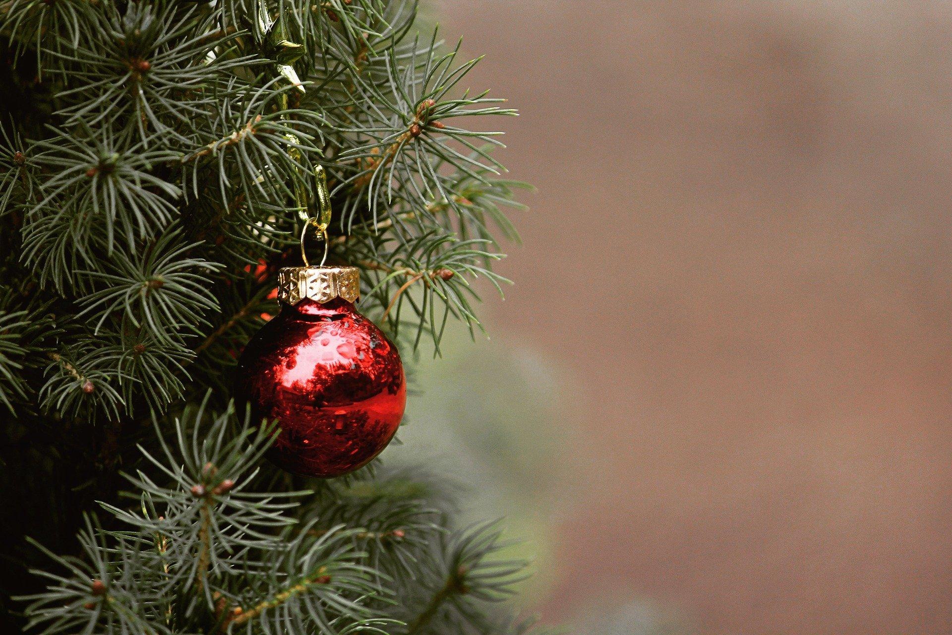 Plantas para decorar la Navidad