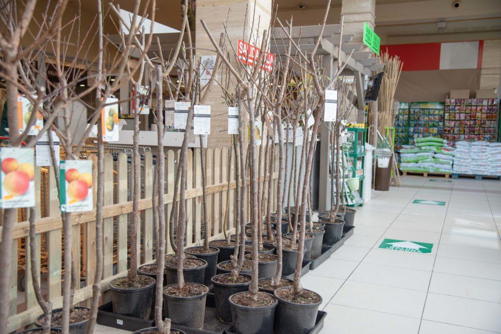 Comprar árboles frutales en Vitoria Gasteiz