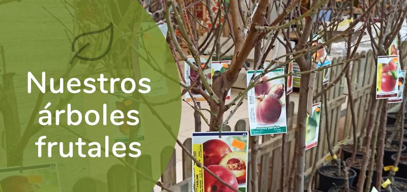 Árboles frutales - Centro de jardinería Gorbeia