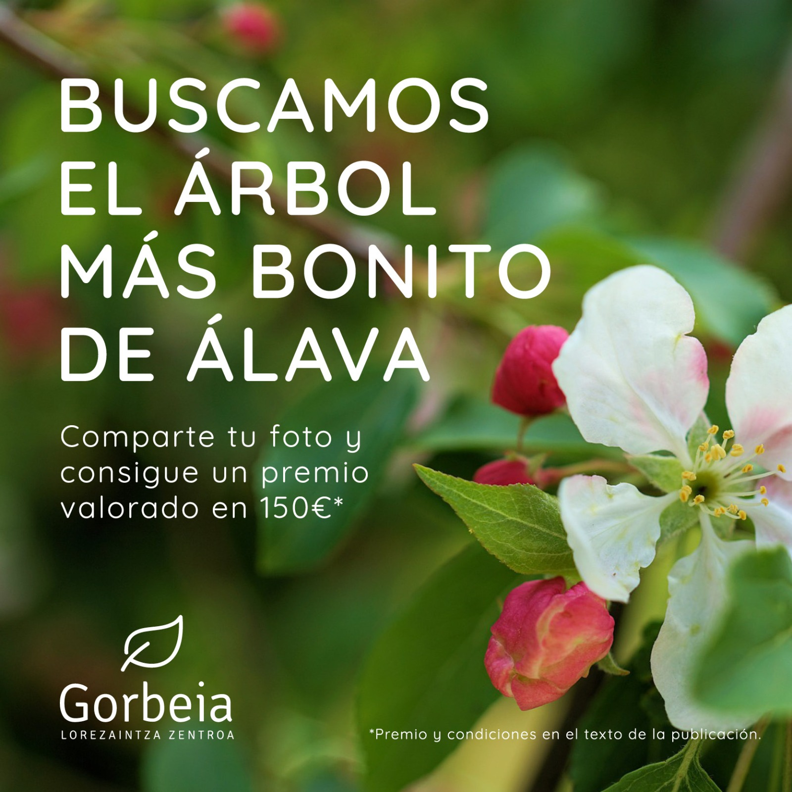 Concurso jardinería Vitoria Gasteiz